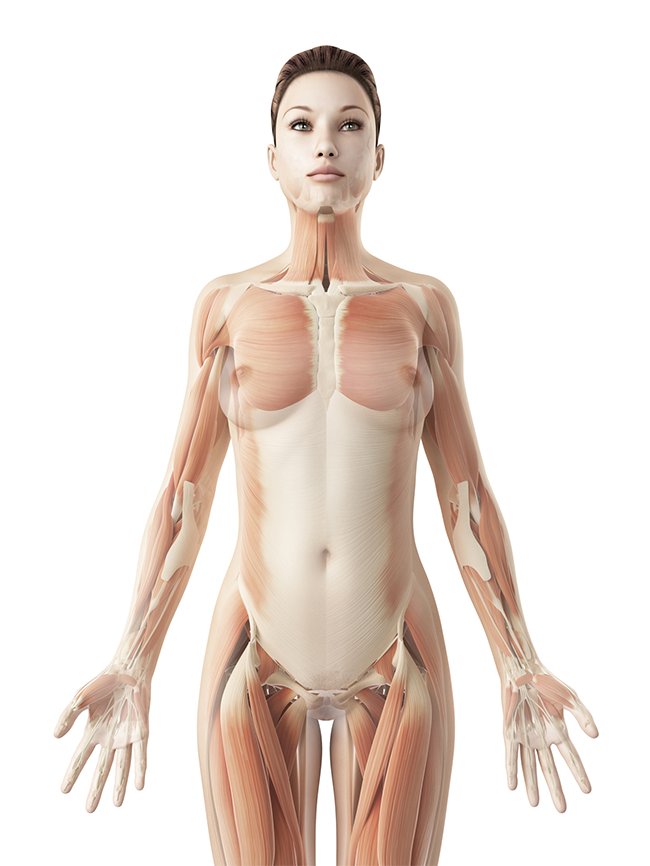 Interactive body illustration